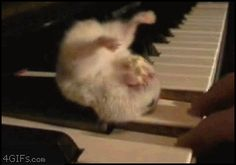 Funny pictures about Just a hamster upside down eating popcorn on a piano key. Oh, and cool pics about Just a hamster upside down eating popcorn on a piano key. Also, Just a hamster upside down eating popcorn on a piano key. Animals And Pets, Baby Animals, Funny Animals, Cute Animals, Can Cats Eat Ham, Animal Pictures, Cute Pictures, Hamster Eating, Cute Hamsters