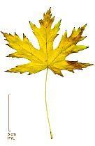 Reconna tre les arbres le tronc la feuille le fruit la fleur faire son herbier photos - Reconnaitre les arbres par leur tronc ...