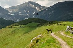 Explore Rodnei Mountains, the second largest national park in Romania and one of the wildest areas of the Carpathian Mountains. Visit Romania, Amazing Places On Earth, Carpathian Mountains, Mountain Trails, Medieval Town, Travel Articles, Nature Reserve, Beautiful World, Wilderness