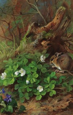 'Woodmouse and Wood Sorrel' by Archibald Thorburn (1860-1935)