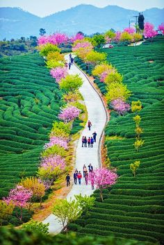 Community Post: 17 Places Worth All Your Vacation Days ~ this is Wuhan, China Wuhan, Places Around The World, Travel Around The World, Around The Worlds, Places To Travel, Places To See, Travel Destinations, Wonderful Places, Beautiful Places