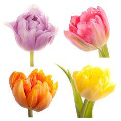 Special Dutch Tulips - Custom Gift Set