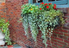 Summer Lush | Window Box Contest