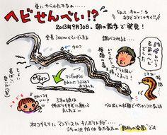 """トキシン tokishin--ヘビせんべい。の画像:トキシンのイラストレーター的""""沖縄""""生活"""