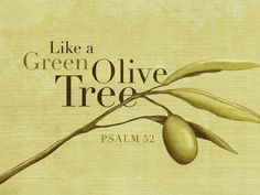 Psalm 52:1b, 8-9   The lovingkindness of God endures all day long. I am like a green olive tree in the house of God; I trust in lovingkindness of God forever and ever. I will give Thee thanks forever, because Thou hast done it. And I will wait on Thy name, for it is good, in the presence of Thy godly ones.