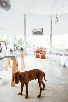 Wirehaired Vizsla #loft #puppy #dogs #vizslalove #dogslovers #hound #artiststudio