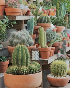 Love love love. What would we do without it? <3 Indoor Cactus Plants, Cactus House Plants, Cactus Cactus, Cactus Decor, Cacti And Succulents, Planting Succulents, Planting Flowers, Ikebana, Little Plants