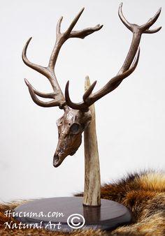 HUCUMA. artesanía en hueso y de diseño.: trofeo de ciervo