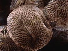 Geranium-Pollen-at-700x-Magnification.jpg 1600×1200 pixels