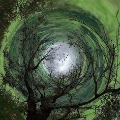 whirling tree by Caroline Jensen, Flickr