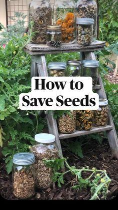 Garden Yard Ideas, Lawn And Garden, Backyard Ideas, Porch Ideas, Patio Ideas, Diy Garden Projects, How To Garden, Summer Garden, Garden Seeds