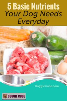 Your dog needs the essential nutrients to grow, go, and glow. Just like humans, your dog needs sufficient nutrition to be healthy. Here're some tips on what basic nutrients your dog need everyday. Dog Nutrition, Dog Diet, Dog Care Tips, Homemade Dog Food, Nutritious Meals, No Cook Meals, Fresh Rolls, Dog Food Recipes, Health And Wellness