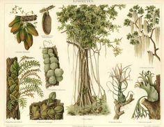 vintage botanical - Google Search