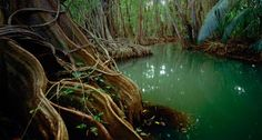 Marigot Forest, Dominica