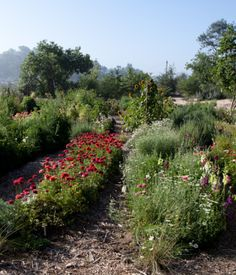 """Laura Gabbert and Andrew Avery's house in Los Angeles's Glassell Parkhosts Silver Lake Farms, a """"flower share,"""" on their seven-acre prop..."""