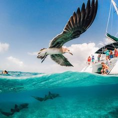 Photo of the Day! @southamerica caught an air + sea feeding frenzy in #Belize. Wade, you nailed it. Show us what you got. #GoPro