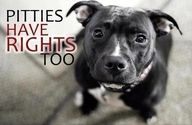 Pitties Have Rights Too