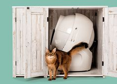 This bundle includes the Litter-Robot 3 Connect—the WiFi-enabled self-cleaning litter box that automatically separates waste from clean litter—along with an extended warranty and a modern farmhouse-style credenza. The credenza not only hides the litter bo Cat Care Tips, Pet Care, Pet Tips, Best Litter Box, Litter Robot, Self Cleaning Litter Box, Modern Cat Furniture, Easy Pets, Cat Scratching Post