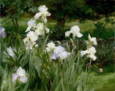 Skitch's White Irises