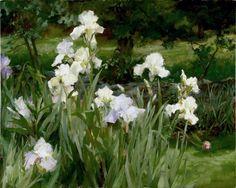 Skitch's White Irises