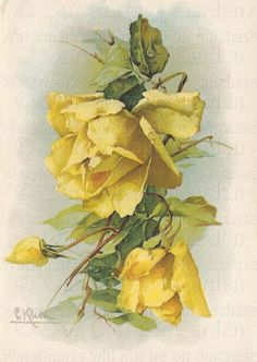 Yellow Roses By Catherine Klein
