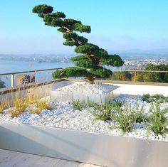 Gartenbonsai mit Seesicht. #terrace #terrassengestaltung #hochbeet #gartenbonsai #bonsai #terrace #terrasse #lifestyle