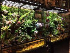 Gecko Terrarium, Aquarium Terrarium, Reptile Terrarium, Garden Terrarium, Planted Aquarium, Reptile House, Reptile Room, Reptile Cage, Tropical Terrariums