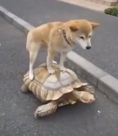 Dog Steals Tortoise In An Attempt To Win Race Against Rabbit!  The Animal Video Of The Day!!!  ... see more at PetsLady.com ... The FUN site for Animal Lovers
