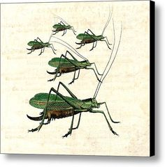Grasshopper Parade 2 Canvas Print #insects #vintage #grasshoppers
