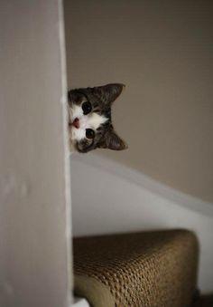 I'm peeping cat