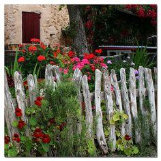 Auch die Beerenecke kann man mit Zierpflanzen, die wenig Platz brauchen, verschönern, z.B. Kapuzinerkresse (kupfer) August