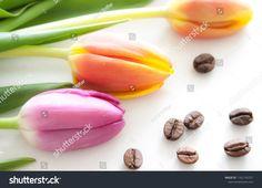Tulip decoration. #tulip #spring #springflower #flower #coffeebean