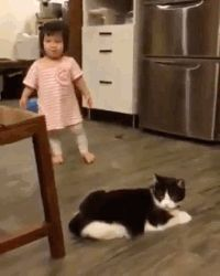 It was but an accident - your daily dose of funny cats - cute kittens - pet memes - pets in clothes - kitty breeds - sweet animal pictures - perfect photos for cat moms Cute Funny Animals, Funny Cute, Cute Cats, Hilarious, Funniest Animals, Cat Fun, Funny Videos, Funny Gifs, Funny Memes