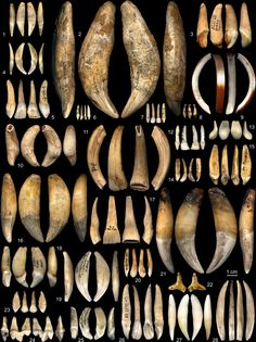Typology of teeth. Journal of Archaeological Science.