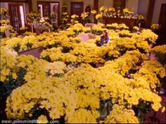 Gilmore Girls a thousand yellow daisies. i want a thousand yellow daisies at my wedding. two because i love daisies. Best Proposal Ever, Perfect Proposal, Team Logan, Gilmore Girls Quotes, Girlmore Girls, Lorelai Gilmore, Stars Hollow, Yellow Daisies, Hopeless Romantic