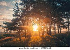 beautiful sunrise on the nature