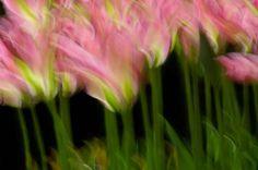 garden breeze 6947