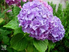 15 Clever Tips For Taking Care Of Your Flower Garden | Postris