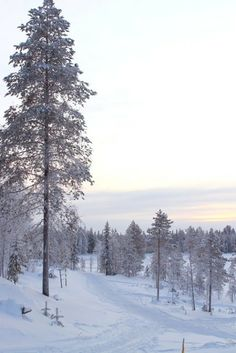 winter Marimekko, Holiday, Christmas, Trees, Snow, Winter, Outdoor, Inspiration, Xmas