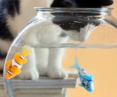 Robotic Fish  The maintenance free robotic fish is the pet your lazy and irresponsible kids have always dreamed of but never knew existed. These robotic pets swim around the tank in five different directions using shockingly realistic looking movements.  $12.99  Check It Out  Awesome Sht You Can Buy