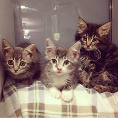 These little angels are named Twitter, Snapchat, and Tumblr, and they are all up for adoption at @kittybungalow