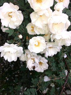 Tupun tupa: Juhannus tunnelmia Helen Keller, Plants, Plant, Planets