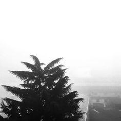 White Christmas #igerstorino #christmas #natale #bw #black #white