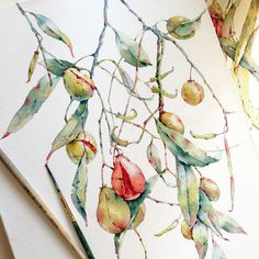Denhamia in watercolor on Behance