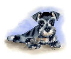 Ranked as one of the most popular dog breeds in the world, the Miniature Schnauzer is a cute little square faced furry coat. Raza Schnauzer, Miniature Schnauzer Puppies, Schnauzer Puppy, Schnauzers, Dog Paintings, Watercolor Paintings, Watercolours, Watercolor Paper, Australian Shepherd Red Tri