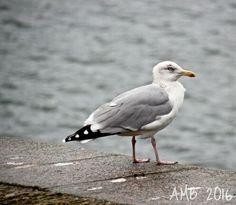 Port du Conquet/Le Conquet, Bretagne Four Square, Bird, Animals, Brittany, Puertas, Animales, Animaux, Birds, Animal