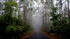 Fog #roadtrip #australia #freedom #luftmensch #luftmenschren #followyourdreams #journey #travel #picoftheday#instagood #photography #blog