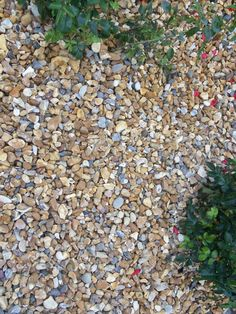 Golden Flint Gravel available in or Decorative Gravel, Backyard, Patio, Flower Beds, Brighton, Stepping Stones, Gardening, Landscape, Outdoor Decor