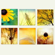 YELLOW AND BRIGHT - Fine art photography prints of yellow flowers, sky etc. Set of six prints. Home Decor.
