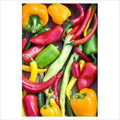 GAP Photos - Garden & Plant Picture Library - Mixed peppers - Capsicum 'Picnic F1', Capsicum 'Jala Peno', Capsicum 'Gepetto', Capsicum 'Fireflame', Capsicum 'Luigi' and Capsicum 'Multi F1' - GAP Photos - Specialising in horticultural photography